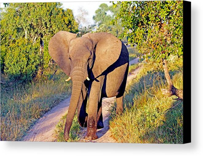 South Canvas Print featuring the photograph Baby Elephant Walk by Evan Peller