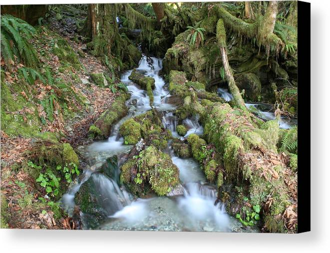 Stream Canvas Print featuring the photograph Baker Lake Steam And Waterfalls by Marv Russell