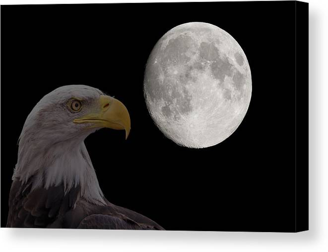 Moon Canvas Print featuring the photograph Bald Eagle With Full Moon - 2 by Chris Smith