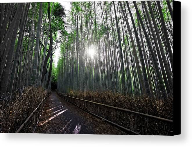 Bamboo Canvas Print featuring the photograph Bamboo Forest Path Of Kyoto by Daniel Hagerman