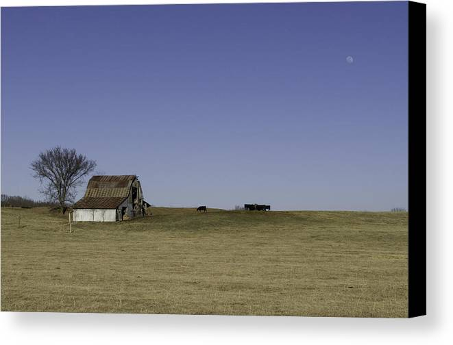 Old Barn Canvas Print featuring the photograph Barn Moon Cattle by Kevin Whitworth