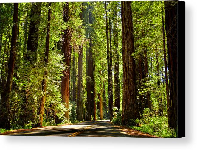 Forest Canvas Print featuring the photograph Beam Of Light In The Trees by Mark McElroy