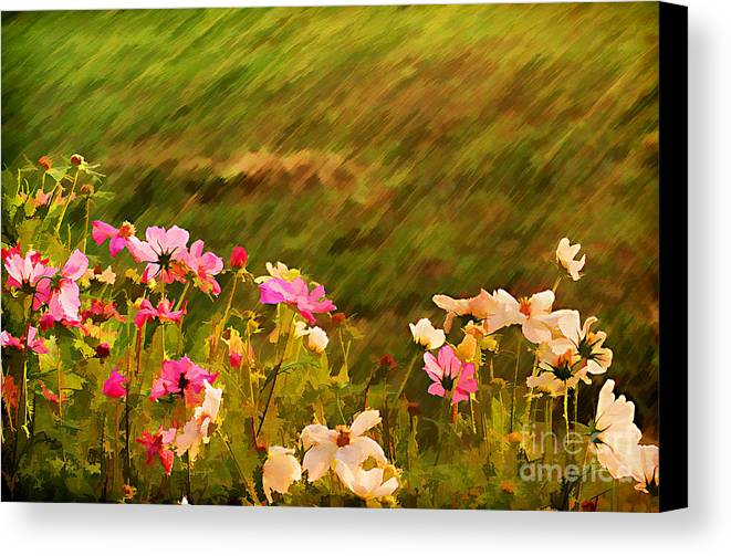 Background Canvas Print featuring the photograph Beautiful Cosmos by Darren Fisher