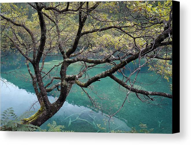 Tree Canvas Print featuring the photograph Beautiful Tree Over Blue Water by Nelson Peng