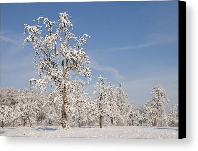 Winter Canvas Print featuring the photograph Beautiful Winter Day With Snow Covered Trees And Blue Sky by Matthias Hauser