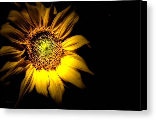 Sunflower Canvas Print featuring the photograph Between Here And There by Bob Orsillo