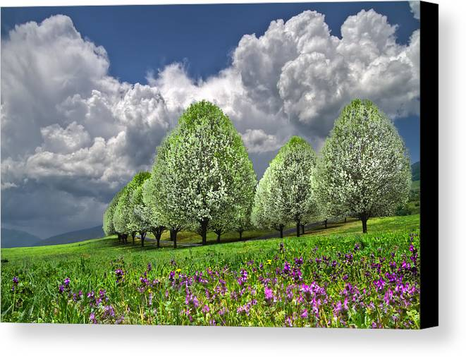 Andrews Canvas Print featuring the photograph Billows by Debra and Dave Vanderlaan