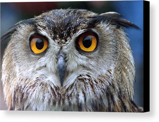 Eagle Canvas Print featuring the photograph Bird 2 by GK Photography