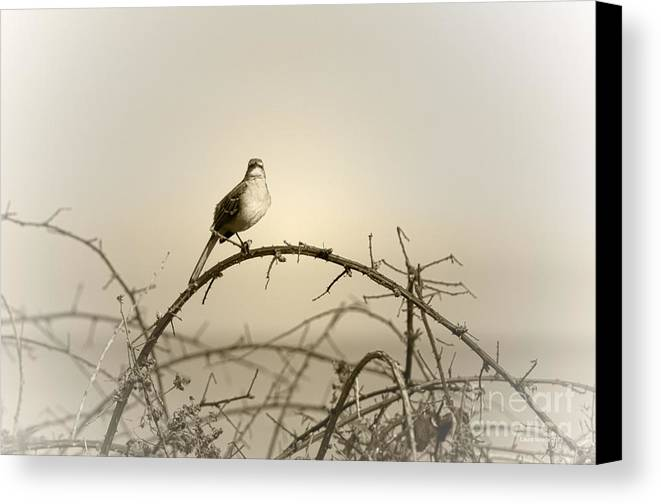Songbird Canvas Print featuring the photograph Bird In The Briar by Artist and Photographer Laura Wrede