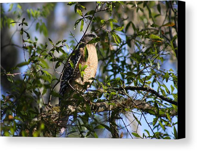 Bird Canvas Print featuring the photograph Bird In Trees by Shari Bailey