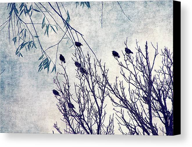 Birds Canvas Print featuring the digital art Birds Of A Feather Flock Together by Cassie Peters