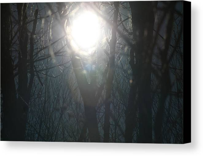 Sun And Trees Canvas Print featuring the photograph Black On Sun  by Neal Eslinger