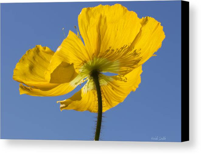 Background Canvas Print featuring the photograph Bloom Time by Heidi Smith