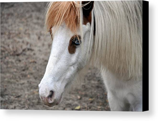 Horse Canvas Print featuring the photograph Blue Eyed Beauty by Kim Clark