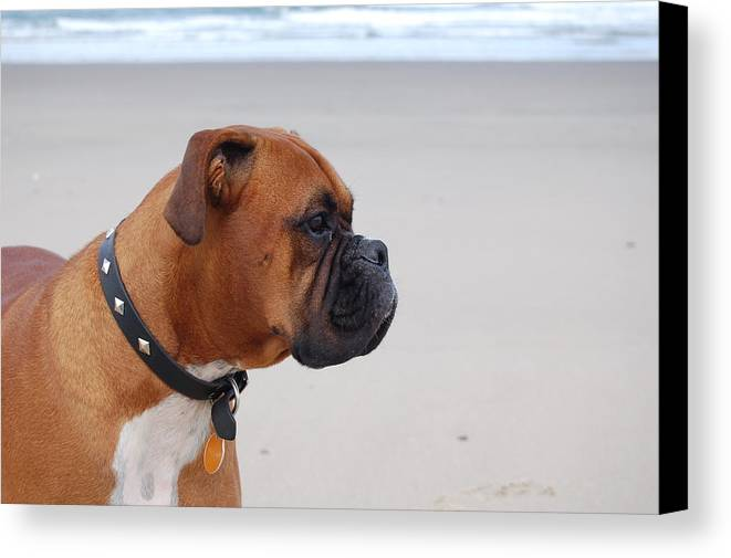 Beach Canvas Print featuring the photograph Boxer By The Sea by Barry Bennett