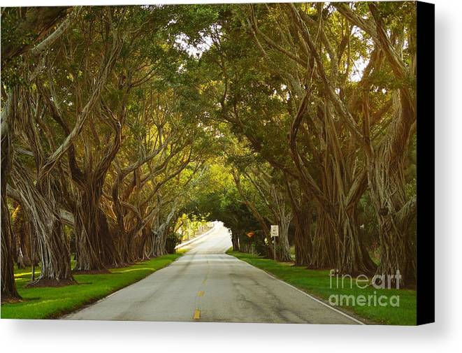 Banyan Canvas Print featuring the photograph Bridge Road Banyans by Lynda Dawson-Youngclaus
