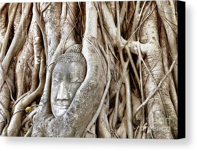 Asia Canvas Print featuring the photograph Buddha Head In Tree Wat Mahathat Ayutthaya Thailand by Fototrav Print