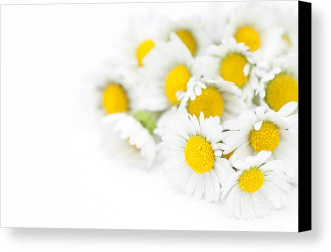 Floral Canvas Print featuring the photograph Bunch Of Daisies by Anne Gilbert