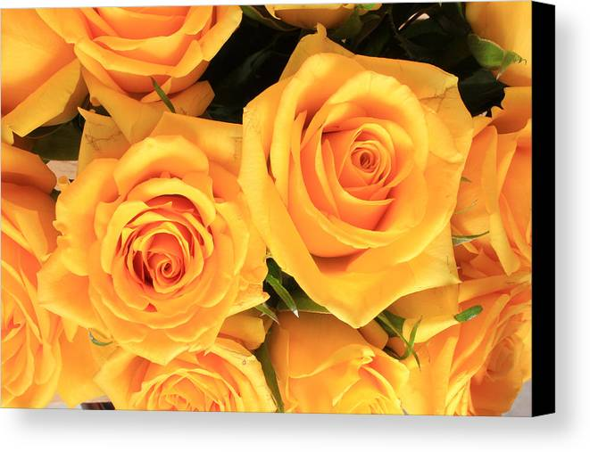 Rose Canvas Print featuring the photograph Bunch Of Yellow Roses by Robert Hamm