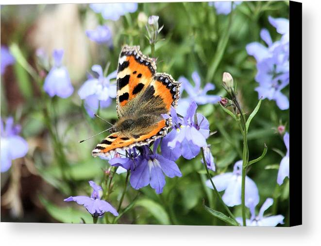 Butterfly Canvas Print featuring the photograph Butterfly On Blue Flower by Gordon Auld