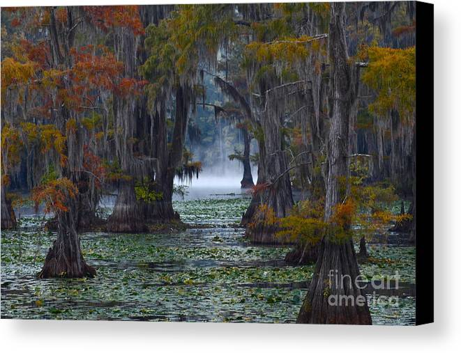 Morning Canvas Print featuring the photograph Caddo Lake Morning by Snow White