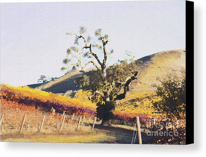 California Wine Country Canvas Print featuring the painting California Vineyard Series Oaks In The Vineyard by Artist and Photographer Laura Wrede