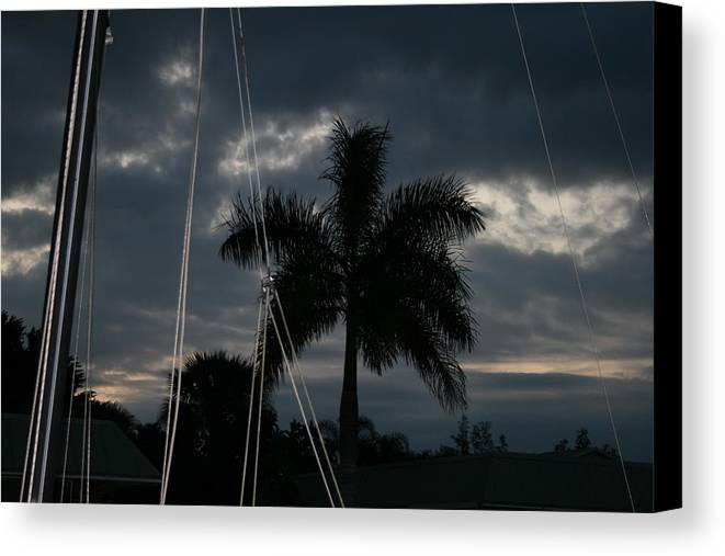 Palm Canvas Print featuring the photograph Calm Before Storm by Paula Pizarro