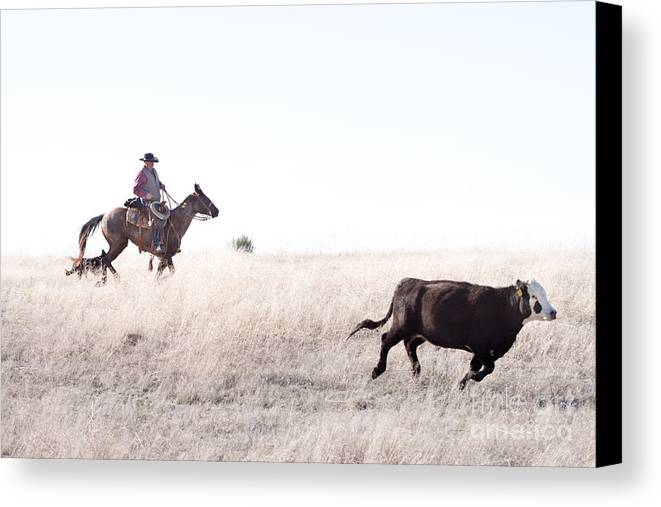 Cowboy Canvas Print featuring the photograph Cattle Drive by Cindy Singleton