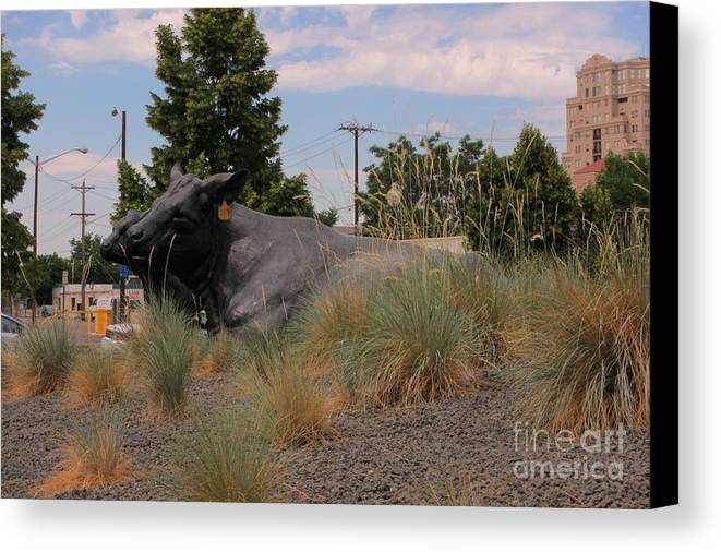 Cattle In Downtown Denver Canvas Print featuring the photograph Cattle In Downtown Denver by John Malone