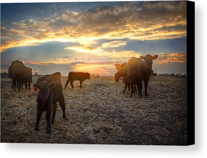 Ranch Canvas Print featuring the photograph Cattle Sunset 2 by Thomas Zimmerman