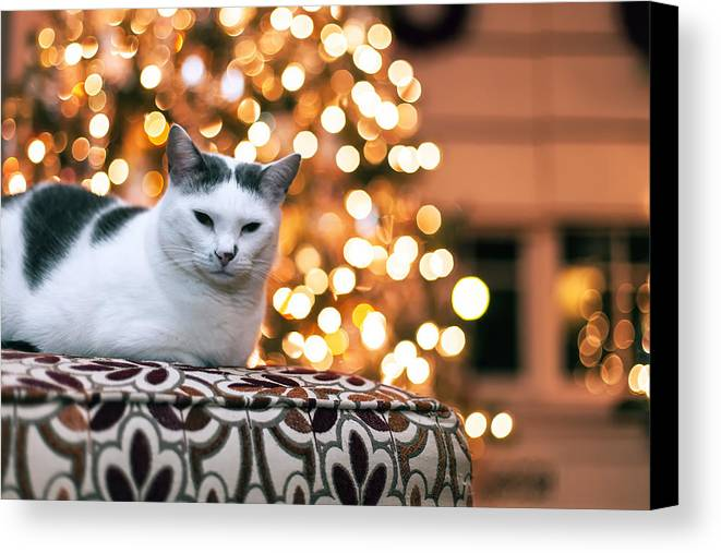 Pet Canvas Print featuring the photograph Charly And The Xmas Tree by Edward Kreis