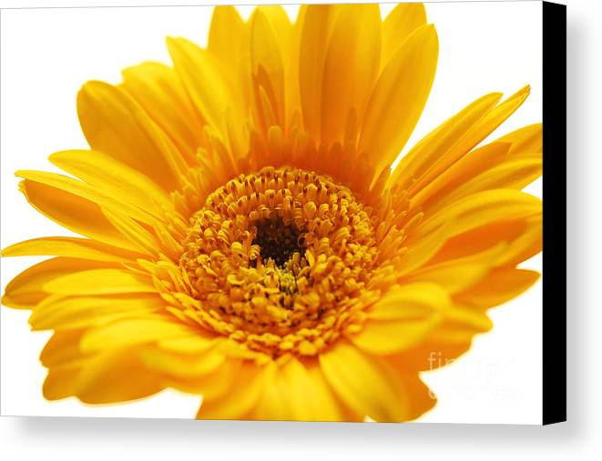 Cheerful Canvas Print featuring the photograph Cheerful Yellow by LHJB Photography
