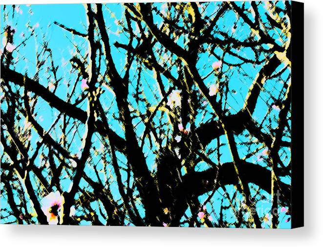 Sharp Canvas Print featuring the photograph Cherry Blossom Iv by Cassandra Buckley
