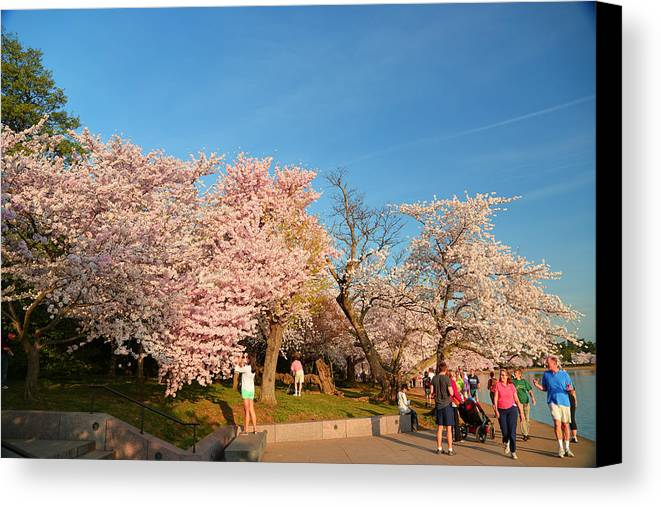 Architectural Canvas Print featuring the photograph Cherry Blossoms 2013 - 015 by Metro DC Photography
