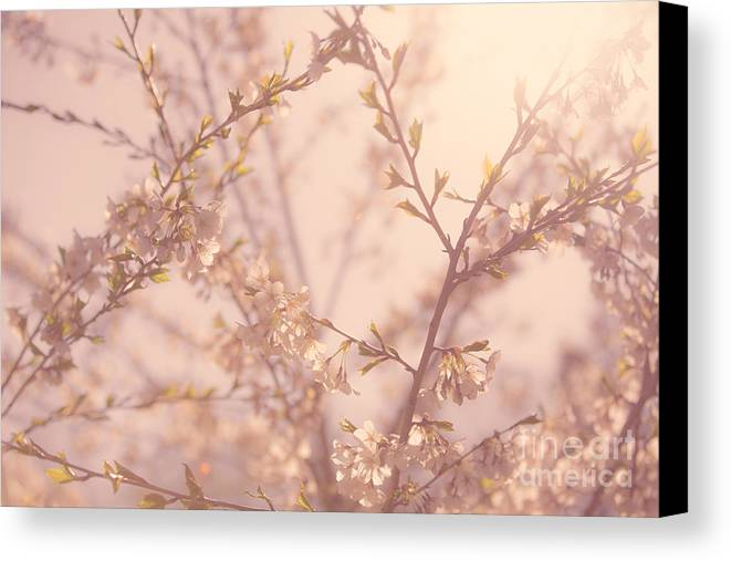 Cherry Blossoms Canvas Print featuring the photograph Cherry Blossoms by Diane Diederich