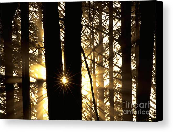 Coastal Forest Canvas Print featuring the photograph Coastal Forest by Art Wolfe