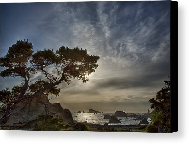 Tree Canvas Print featuring the photograph Coastal Vision by Alan Kepler