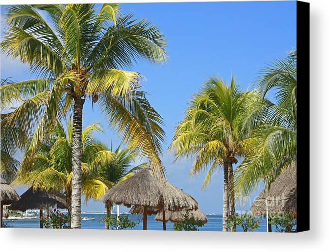 Tropical Canvas Print featuring the photograph Coconut Palm Forest by Charline Xia