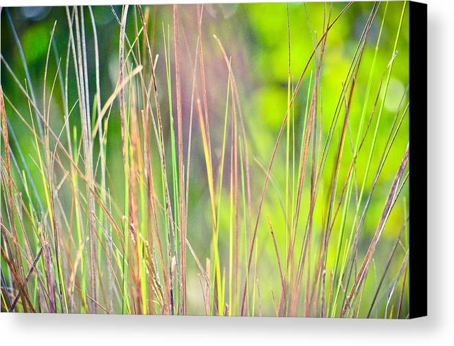 Canvas Print featuring the photograph Collier-seminole Sp 15 by Becky Anders