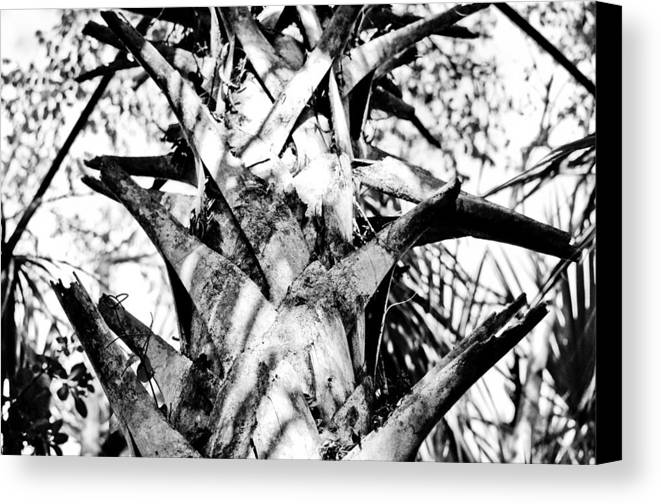 Canvas Print featuring the photograph Collier-seminole Sp 17 by Becky Anders