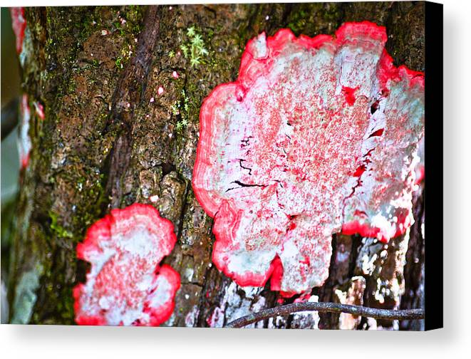 Canvas Print featuring the photograph Collier-seminole Sp 31 by Becky Anders