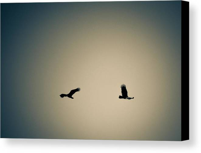 Canvas Print featuring the photograph Collier-seminole Sp 6 by Becky Anders