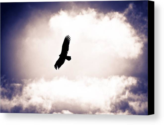 Canvas Print featuring the photograph Collier-seminole Sp 8 by Becky Anders