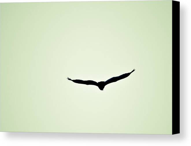 Canvas Print featuring the photograph Collier-seminole Sp 9 by Becky Anders
