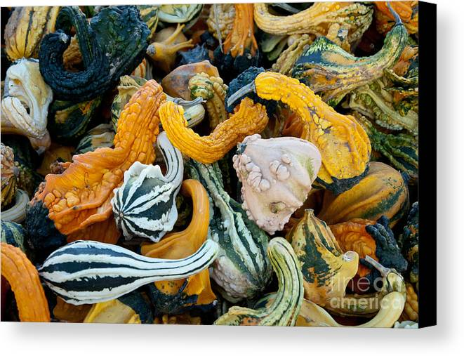 Nature Canvas Print featuring the photograph Colorful Gourds by Phil McCollum