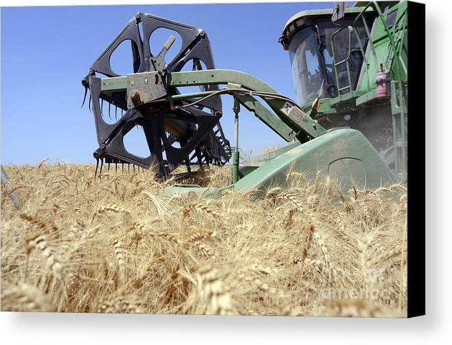 Combine Harvester Canvas Print featuring the photograph Combine Harvester by Shay Fogelman