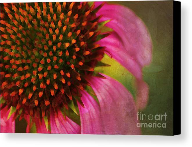Painterly Canvas Print featuring the photograph Coneflower by Darren Fisher