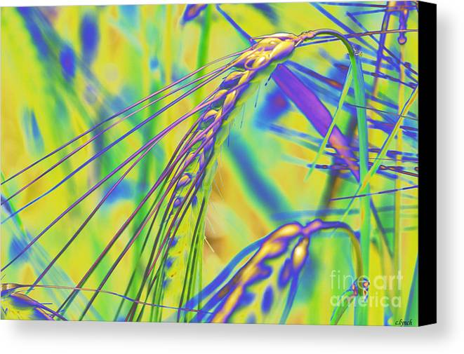 Corn Canvas Print featuring the digital art Corn by Carol Lynch