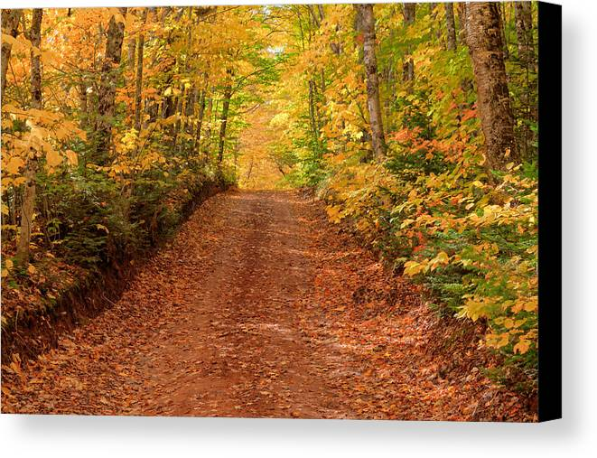Autumn Canvas Print featuring the photograph Country Lane In Autumn by Matt Dobson