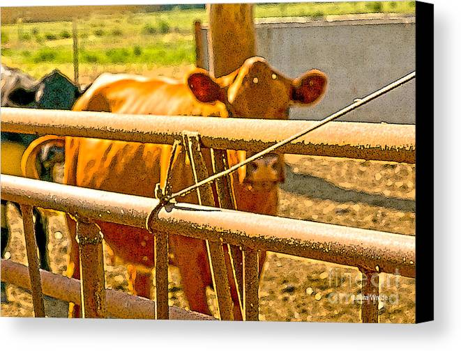 Cow Art Photographs Canvas Print featuring the photograph Cows Coming Home by Artist and Photographer Laura Wrede